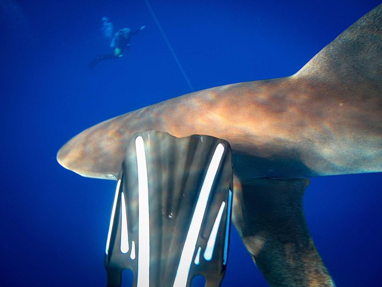 Erich Ritter: Shark School